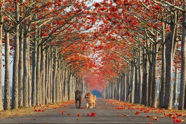 ruas-cobertas-flores-arvores-12