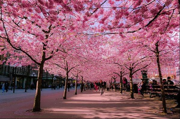 ruas-cobertas-flores-arvores-3