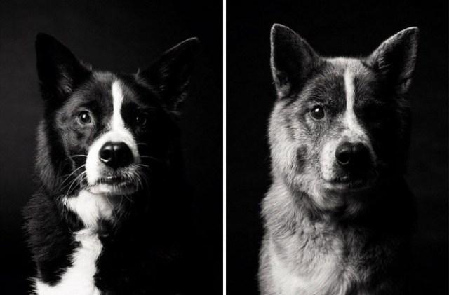envelhecimento-de-cães-10