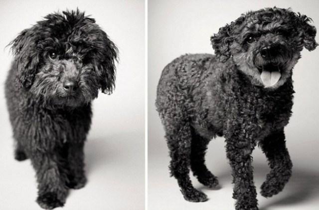 envelhecimento-de-cães-8
