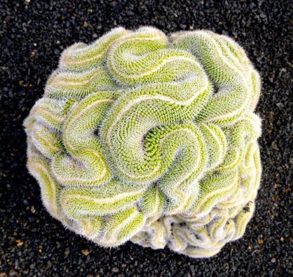 plantas-geométricas-15