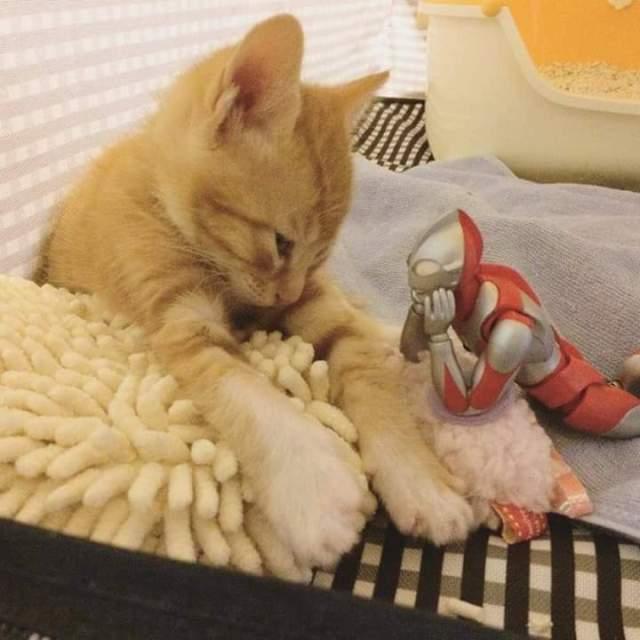 gato e ultraman 04
