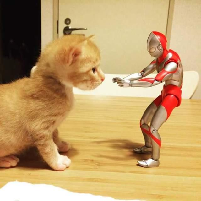 gato e ultraman 05