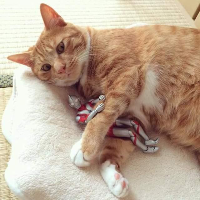 gato e ultraman 11