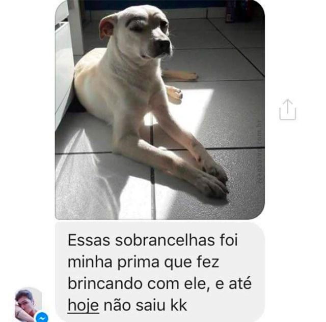 cachorro-01