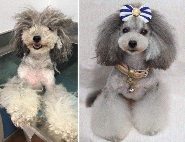 salão de beleza para cães
