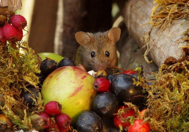 vila dos ratos