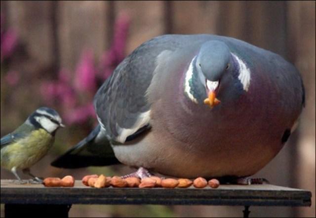 Animais obesos
