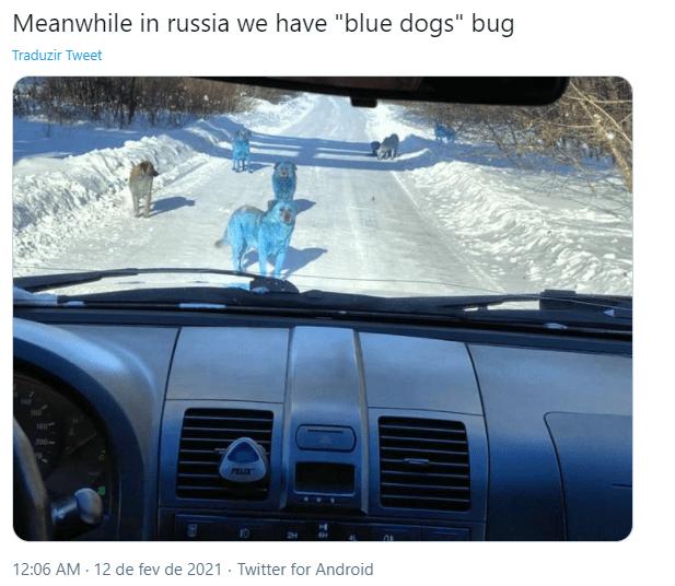 cães azuis