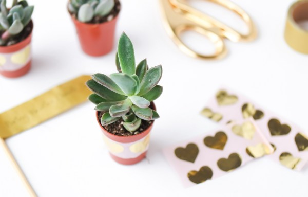 valentines day succulents-1031