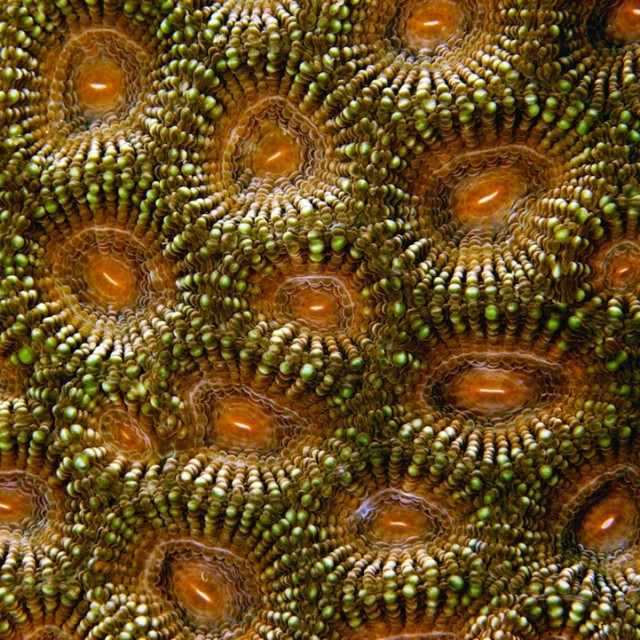 Fascinating-Macro-Shots-of-Underwater-Coral_5-640x640
