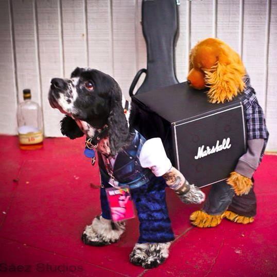 roupas-cachorros-inspi-1