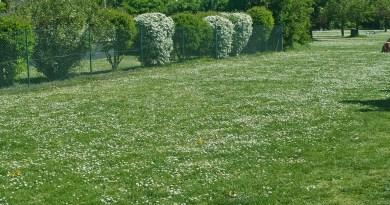 Background Green Meadow Plot Park  - AdiMiraMichaels / Pixabay