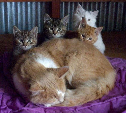 Pouncer and his litter