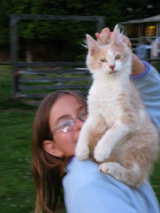Big Kitten Pounce