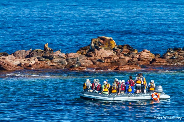 BAJA Sea Lions & Skiff-CR Un-Cruise Adventures & Peter West Carey