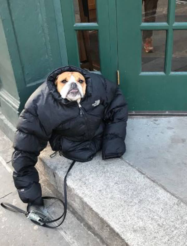 10. Dog and his jacket