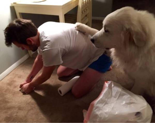 5. Dog vomit
