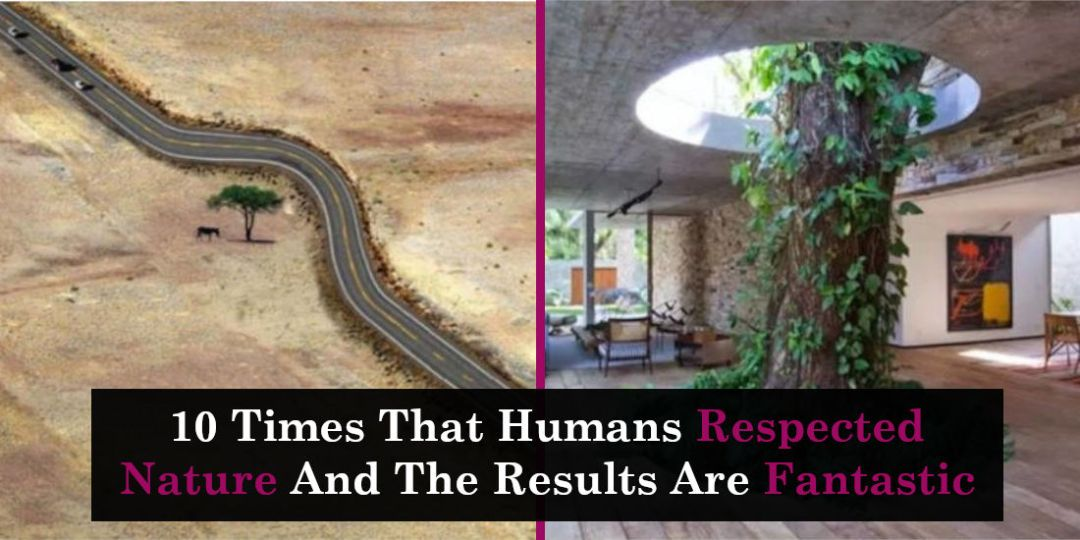 10 Times That Humans Respected Nature And The Results Are Fantastic