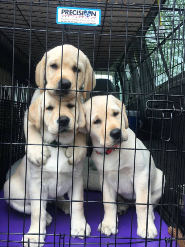 11. These pups pose better than the Kardashians. That's for sure.