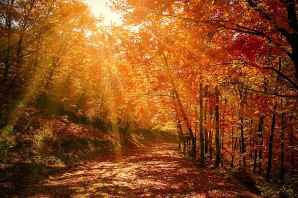 2. An Autumnal Path