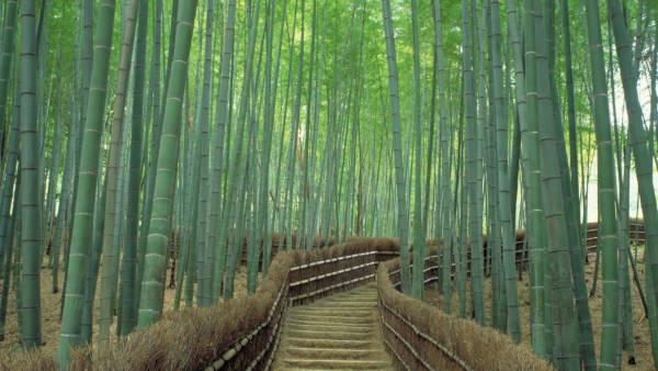 4. Bamboo Walkway