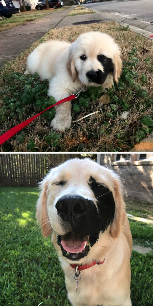 6. This retriever's birthmark makes it even more beautiful to the eye. It isn't a freak of nature for God gave it a personal touch.