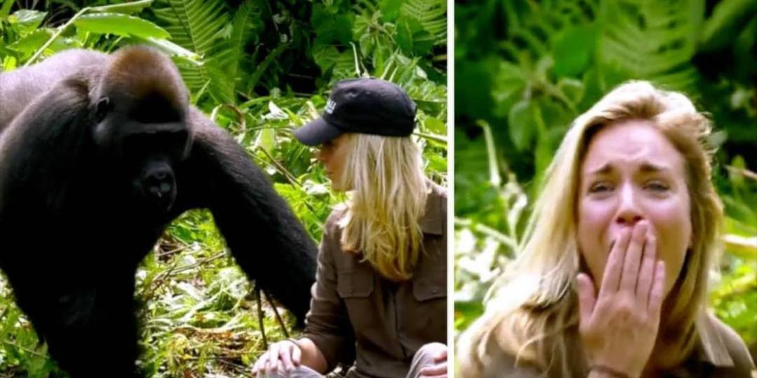 Damian Aspinall Introduces His Wife To Gorillas He Raised And Things Didn't Go As Planned