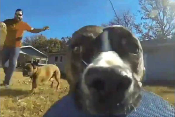 A Dog Steals Owner's GoPro And The Result Will Make You Laugh - 1