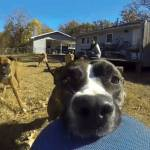 A-Dog-Steals-Owner's-GoPro-And-The-Result-Will-Make-You-Laugh-2