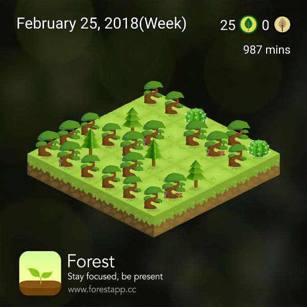 week three forest