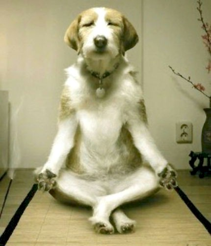 https://i1.wp.com/www.inspiredliving.com/stress/DogMeditation.jpg