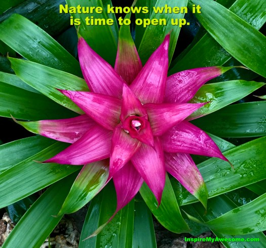 Nature Knows When It Is Time to Open Up