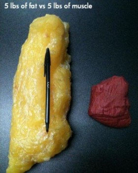 5lbs of Fat vs. 5 lbs of muscle