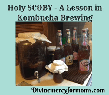 Holy SCOBY - A lesson in Kombucha Brewing