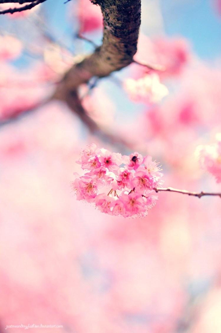 Primavera Hanami Style