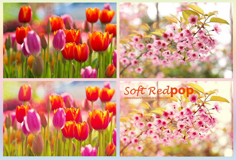 20 free spring photoshop actions