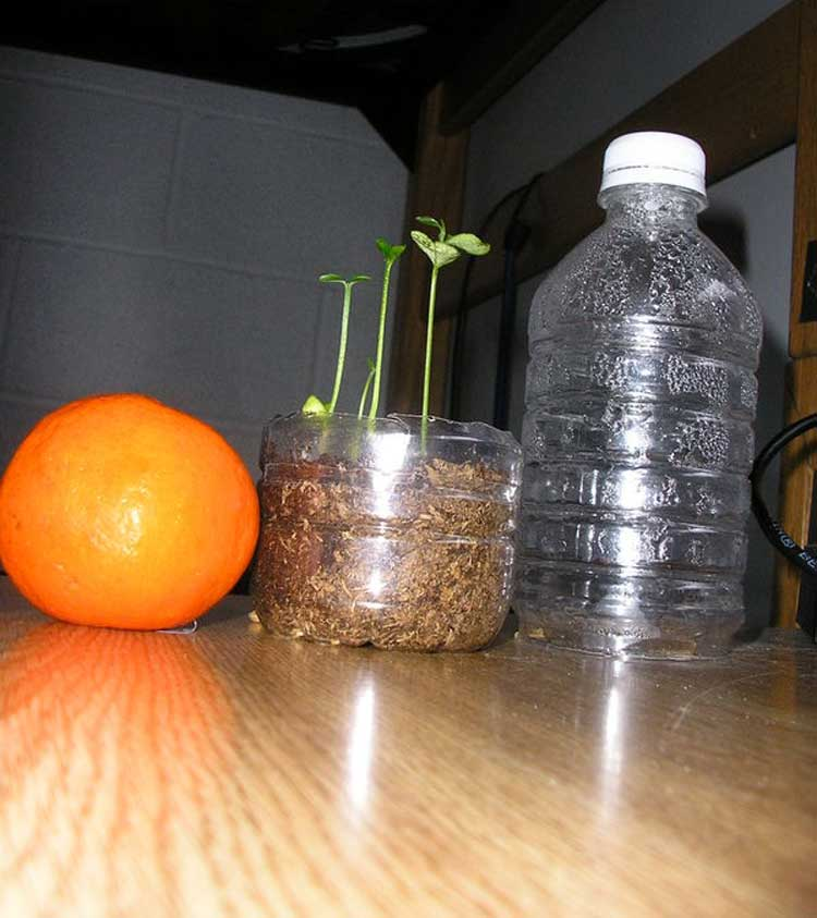 come coltivare gli agrumi