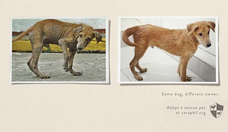 Pubblicità scioccanti - adozione animali