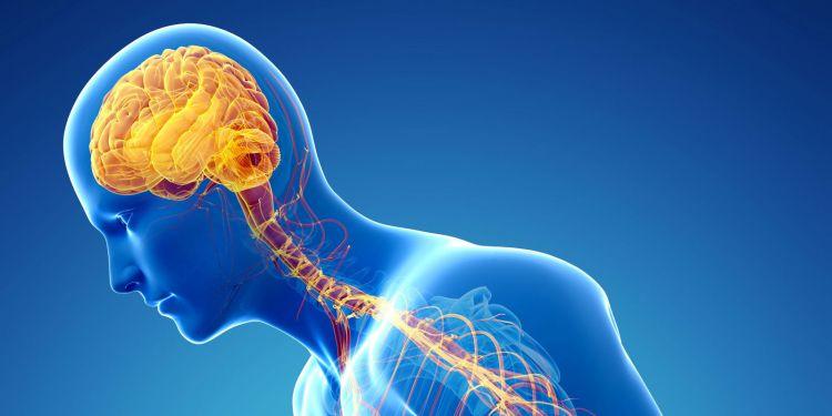 sistem saraf manusia