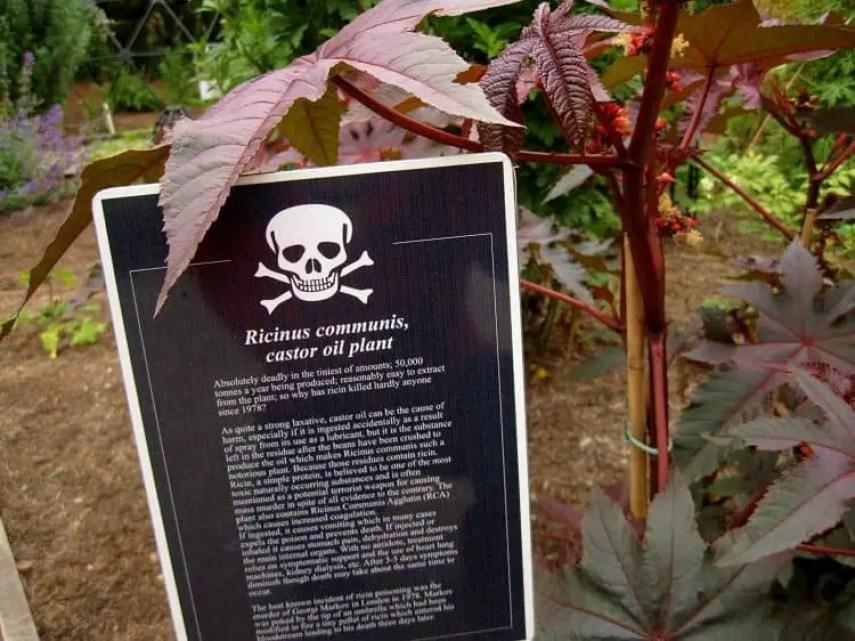 castor oil poison