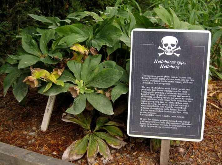 Life in the Poison Garden