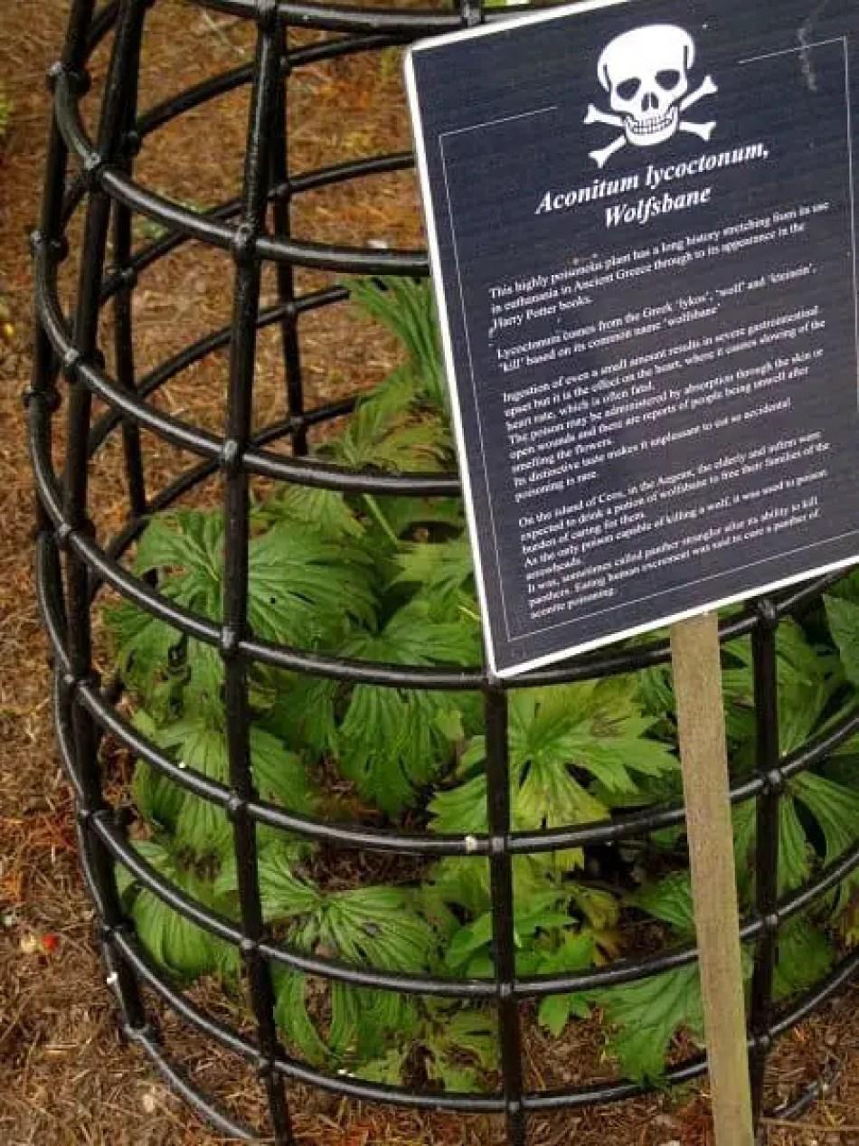 wolfsbane poison garden