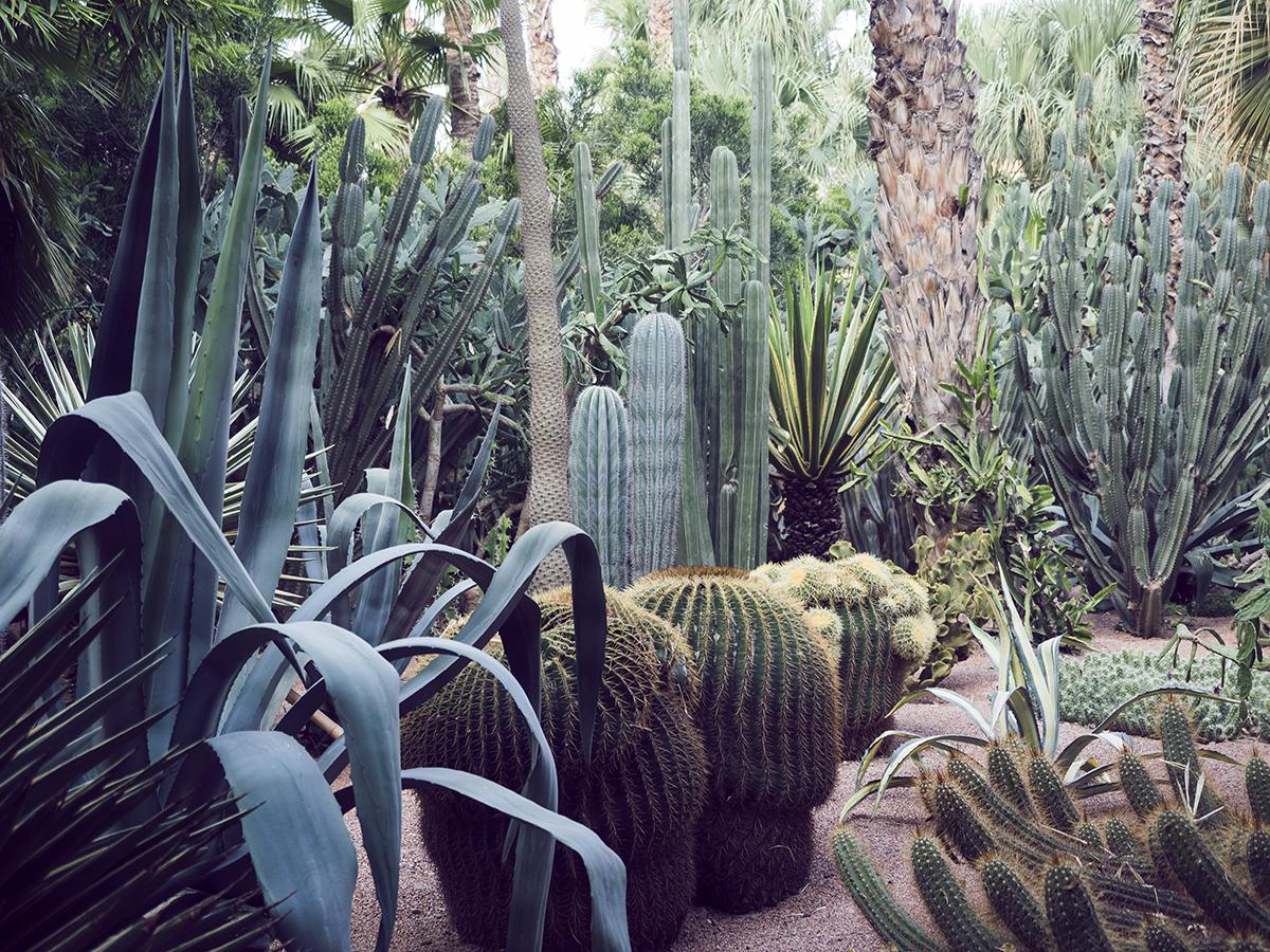 Morocco travel diary Inspiring Wit yves saint laurent jardin majorelle cacti garden