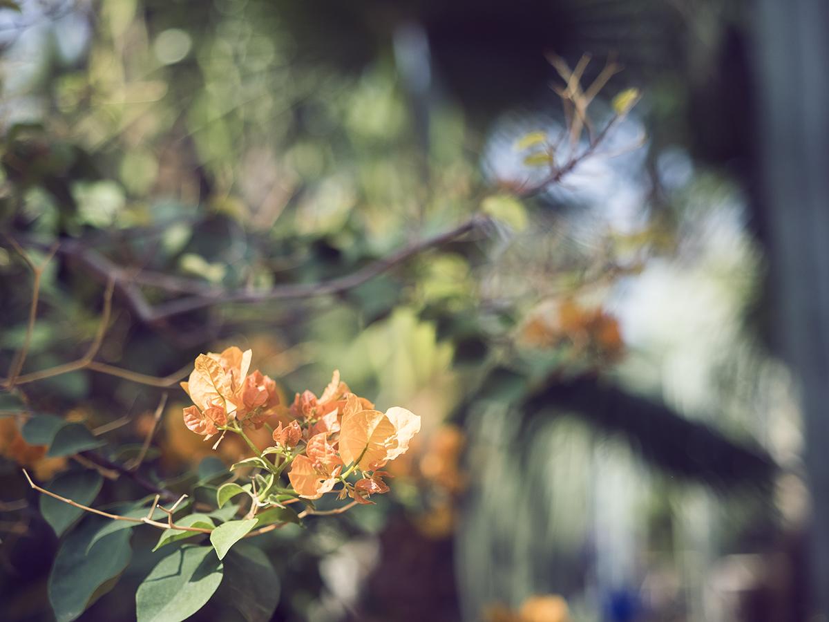 Morocco travel diary Inspiring Wit yves saint laurent jardin majorelle garden bougainvillea