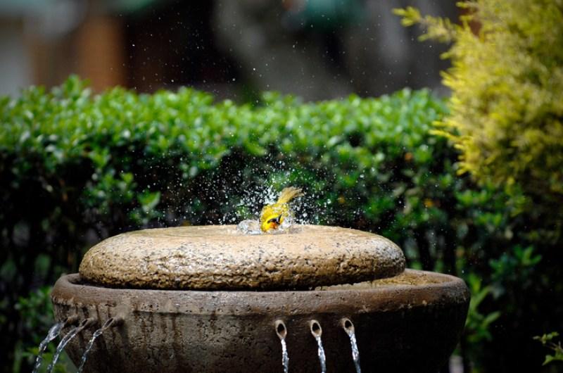 Bird Bath Fountain Area