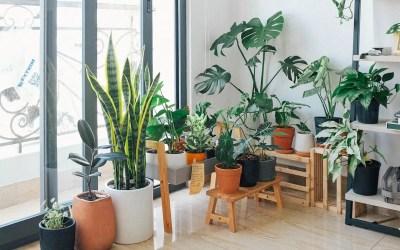 Macetas de autorriego o hidrojardineras: Qué son, cómo funcionan y cómo puedes hacer una casera para tus plantas