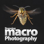 80 Stunning Examples Of Macro Photography