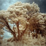 99 Brilliant Examples of Infrared Photography