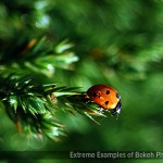 99 Extreme Examples of Bokeh Photography